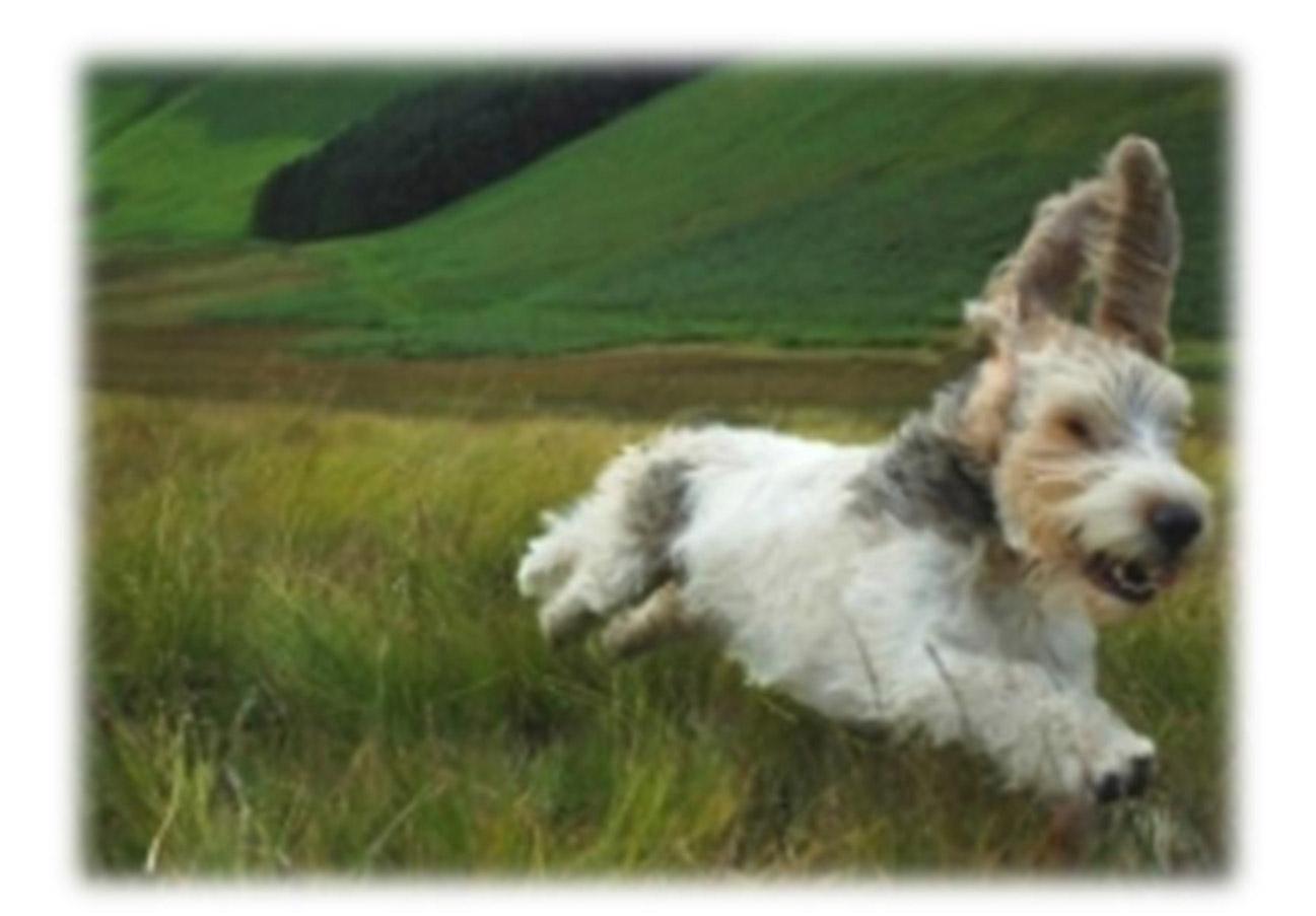 Dog Kennels Penrith Cumbria