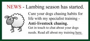 sheepchasing image for website