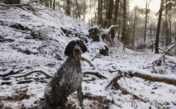 Jaeger the wandering GSP…
