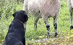 Poppy meets some different four legged animals